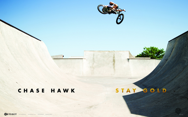chase-hawk-stay-gold-600x